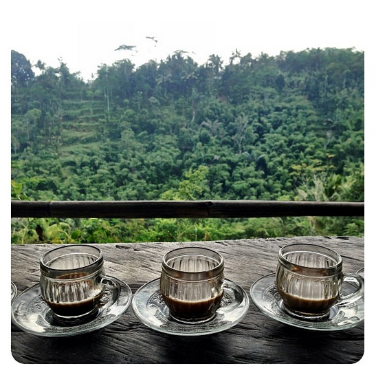 Our trip to a coffee and spice plantation, including an awesome coffee tasting with a view to die for