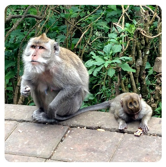I LOVED meeting a whole lot of monkeys on one of our outings!