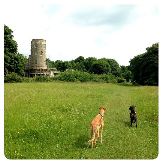 The hounds discover a Gothic folly