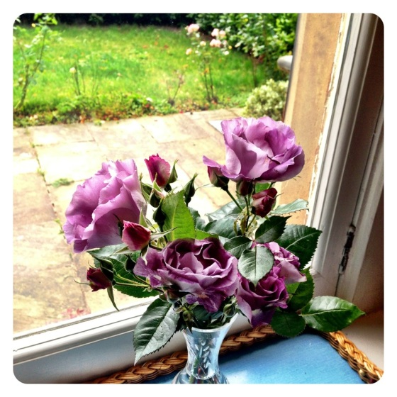 Beautiful mauve roses brought in from our little garden