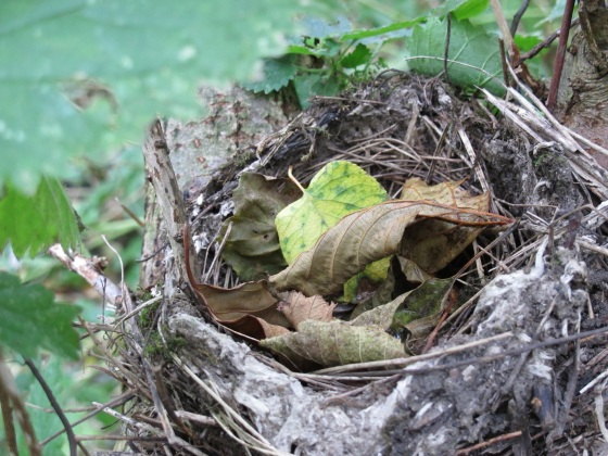 Vacated bird nest