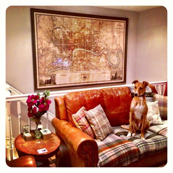 Giant London map, posing dog