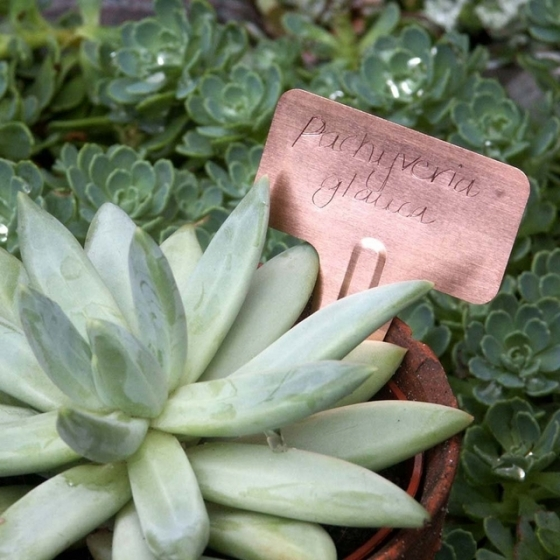 Burgon and Ball Copper 'Tee' Plant Labels, via Under a Glass Sky