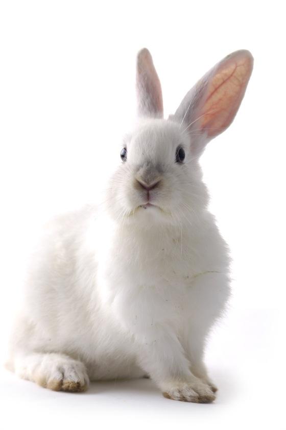 19857-rabbit